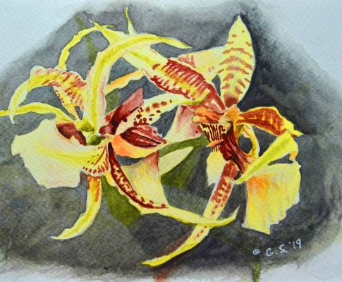 No. 27  Yellow Orchids – Time Lapse Watercolour Sketch