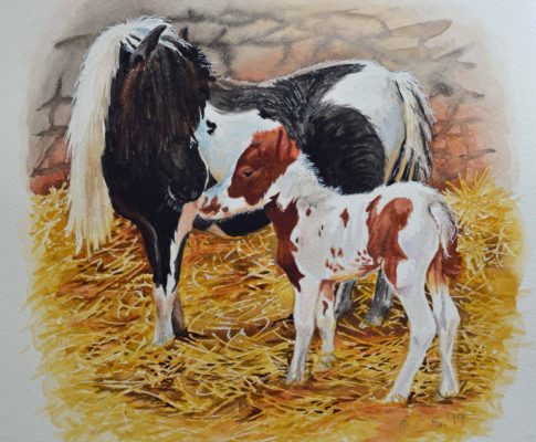 No. 29  Pony and Foal – Time Lapse Watercolour Sketch