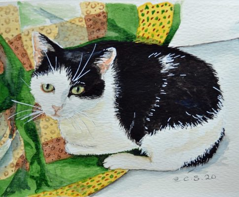"55 ""Max – Portrait of a Cornish Cat"" – Watercolour Sketch (Time Lapse)"