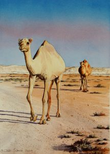 """A Walk in the Desert"" by Carie Sauzé"