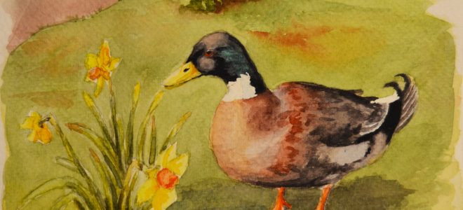 First YouTube video – Time Lapse Watercolour Sketch of a Duck