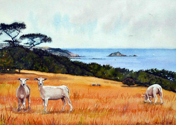 High Summer, Newly Shorn Sheep 1