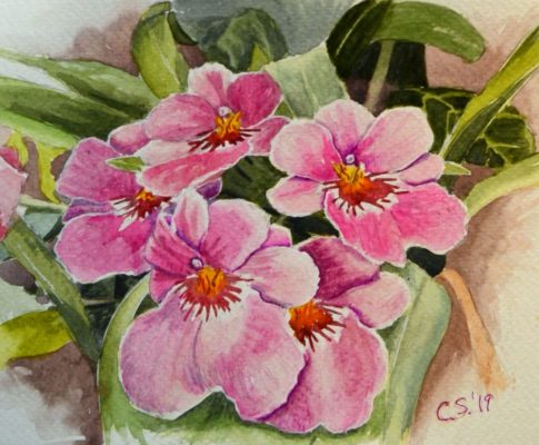 No. 4 Time Lapse – Watercolour Sketch – Pink Orchids