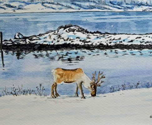 No. 32 Reindeer at Hasnes, Norway – Time Lapse Watercolour Sketch