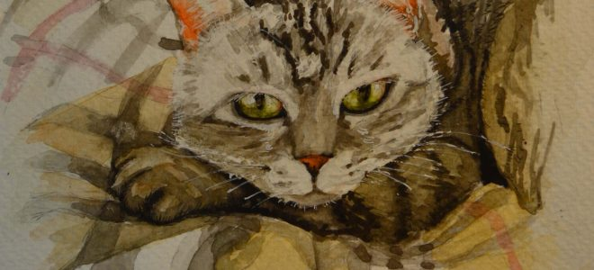 No. 8 Time Lapse Watercolour Sketch of a Cat