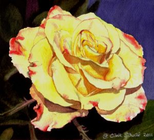 """""""Pink and Yellow Rose #1"""" by Carie Sauzé"""