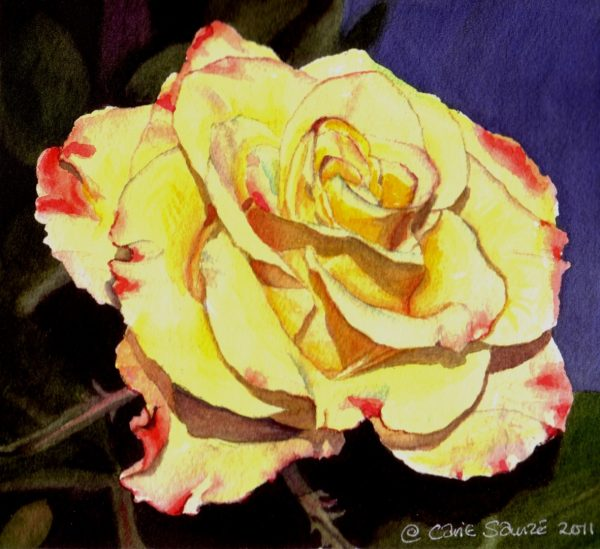 """Pink and Yellow Rose #1"" by Carie Sauzé"